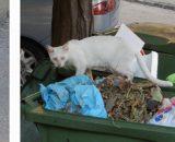 Saloniki kotami stoją ;) są wszędzie