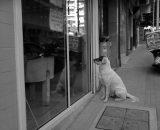 Podpatrzone ;) Kolega czekał cierpliwie na kość pod sklepem mięsnym;)