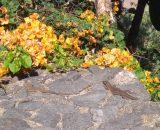 Salamander w parku przy Playa Jardin było mnóstwo