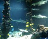 Muzeum Oceanograficzne